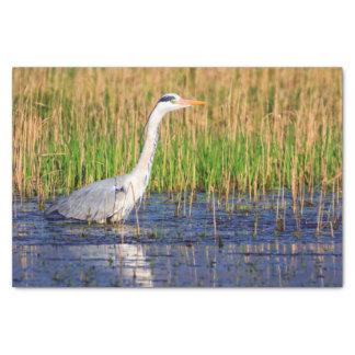 Grey heron, ardea cinerea, in a pond tissue paper
