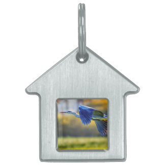 Grey heron, ardea cinerea pet ID tag