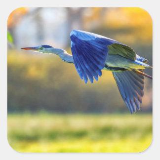 Grey heron, ardea cinerea square sticker