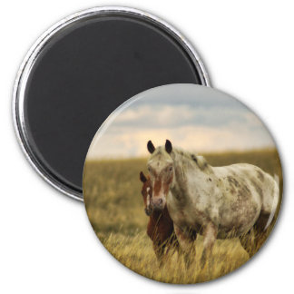 Grey Horse with Baby Magnet