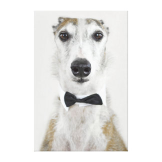 Grey Hound dressed up Canvas Print