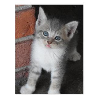 Grey Kitten Ready to Pounce 2016 Postcard