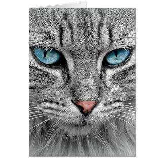 Grey Long  Hair Cat Blue Green Eyes Pet Animal Card