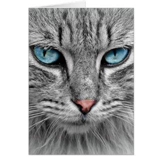 Grey Long  Hair Cat Blue Green Eyes Pet Animal Greeting Card