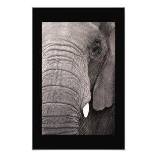 Grey Majesty Photo Art