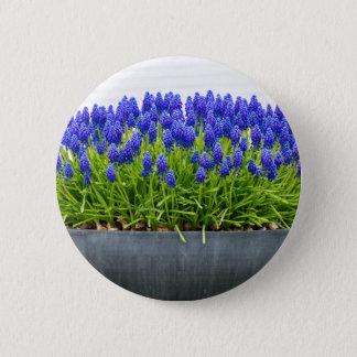 Grey metal flower box with blue grape hyacinths 2 inch round button