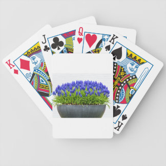 Grey metal flower box with blue grape hyacinths bicycle playing cards