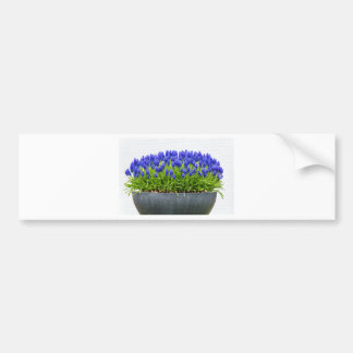 Grey metal flower box with blue grape hyacinths bumper sticker