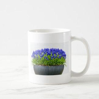 Grey metal flower box with blue grape hyacinths coffee mug