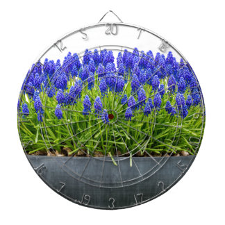 Grey metal flower box with blue grape hyacinths dartboard