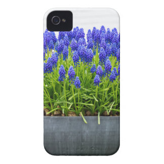 Grey metal flower box with blue grape hyacinths iPhone 4 Case-Mate case
