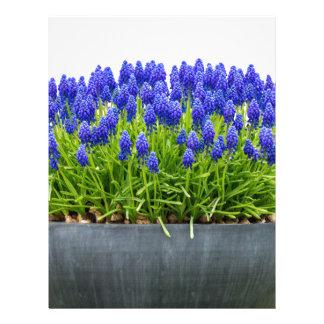 Grey metal flower box with blue grape hyacinths letterhead