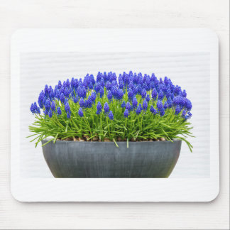 Grey metal flower box with blue grape hyacinths mouse pad