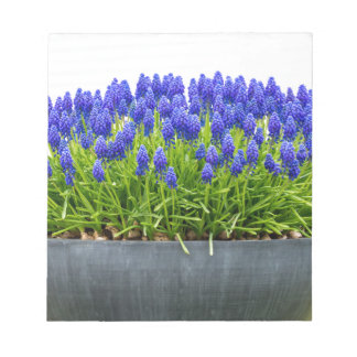 Grey metal flower box with blue grape hyacinths notepad
