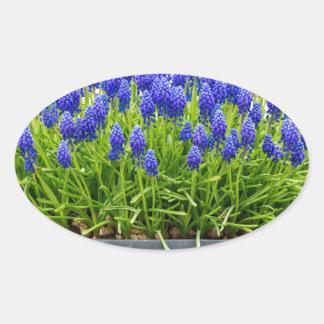 Grey metal flower box with blue grape hyacinths oval sticker
