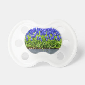 Grey metal flower box with blue grape hyacinths pacifier