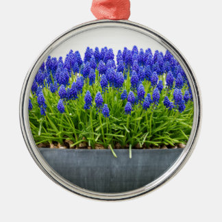 Grey metal flower box with blue grape hyacinths Silver-Colored round ornament
