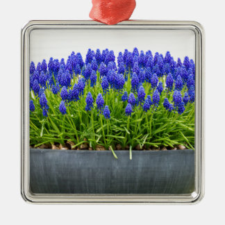 Grey metal flower box with blue grape hyacinths Silver-Colored square ornament