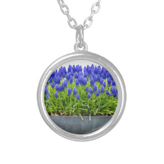 Grey metal flower box with blue grape hyacinths silver plated necklace