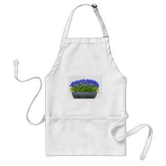 Grey metal flower box with blue grape hyacinths standard apron