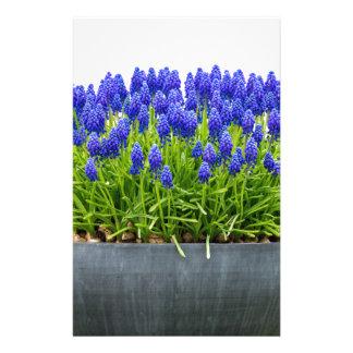 Grey metal flower box with blue grape hyacinths stationery