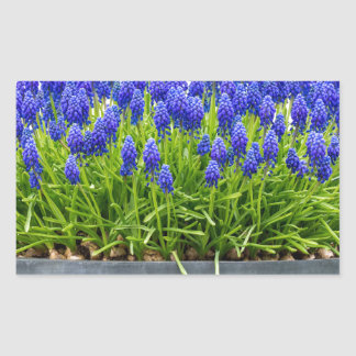 Grey metal flower box with blue grape hyacinths sticker
