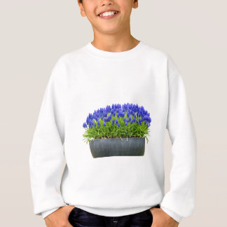 Grey metal flower box with blue grape hyacinths sweatshirt