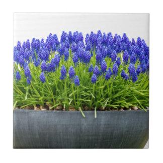 Grey metal flower box with blue grape hyacinths tile