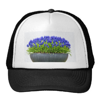 Grey metal flower box with blue grape hyacinths trucker hat