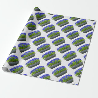 Grey metal flower box with blue grape hyacinths wrapping paper