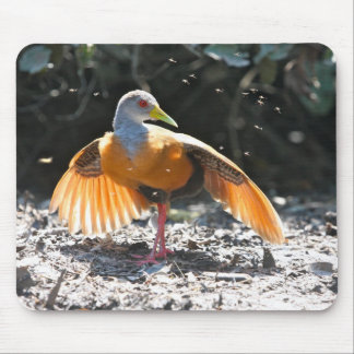 Grey-necked Woodrail drying off Mousepad