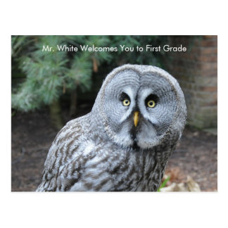 Grey Owl Welcome to School Message Postcard