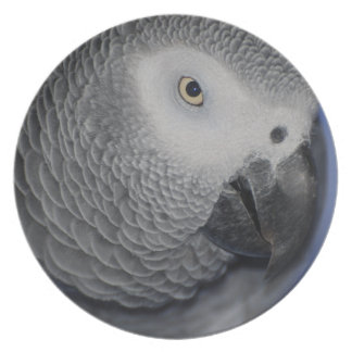 Grey Parrot Plate