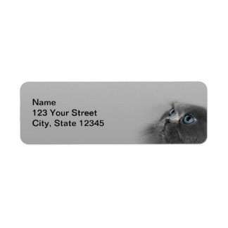 Grey Persian Cat with Blue Eyes on Grey Return Address Label