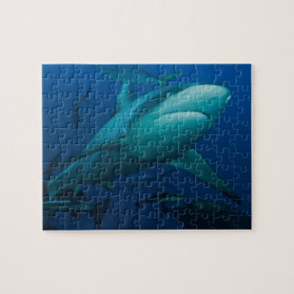 Grey Reef Shark Great Barrier Reef Puzzles