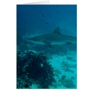 Grey Reef Shark Swimming Card