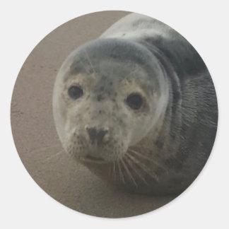 Grey seal adorable pup baby