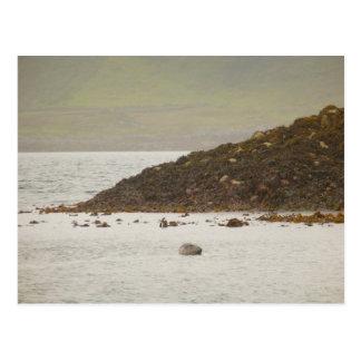 Grey Seal Postcard