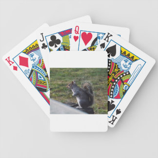 Grey Squirrel Bicycle Playing Cards