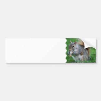 Grey Squirrel  Bumper Sticker