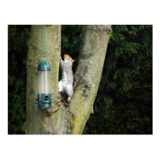 Grey Squirrel  Card