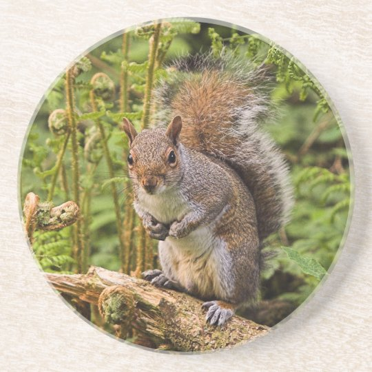 Grey Squirrel Coaster