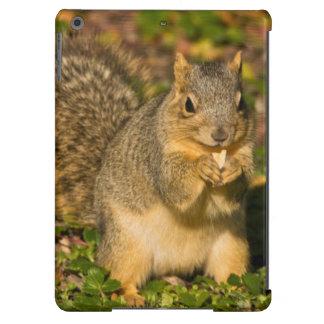 Grey Squirrel, eating, peanut, Crystal Springs 1 Case For iPad Air