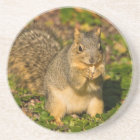 Grey Squirrel, eating, peanut, Crystal Springs 1 Coaster