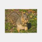 Grey Squirrel, eating, peanut, Crystal Springs 1 Fleece Blanket