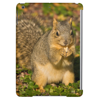 Grey Squirrel, eating, peanut, Crystal Springs 1 iPad Air Cover