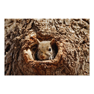 Grey Squirrel in a Hole Art Print