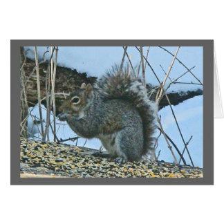 Grey Squirrel Note Card