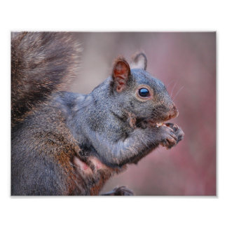 Grey Squirrel Photo Print