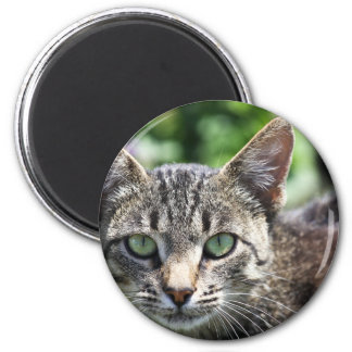 Grey Stripe Cat with Green Eyes Magnet